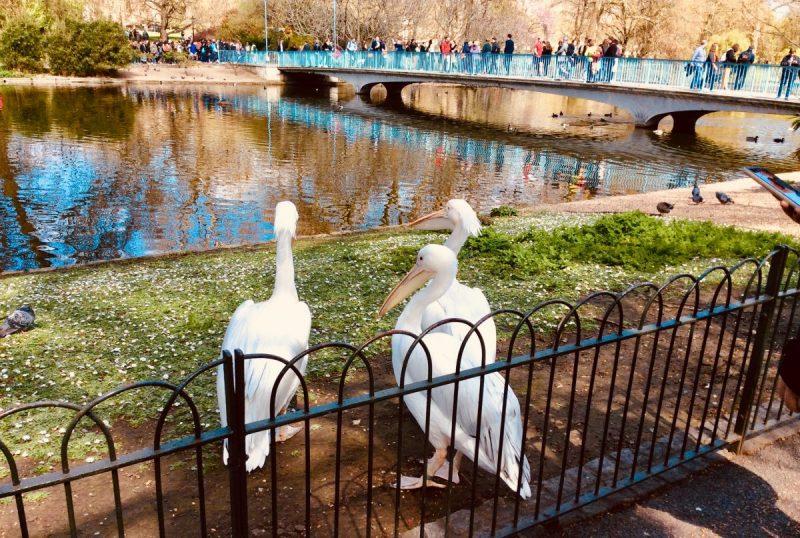 londra parco centrale