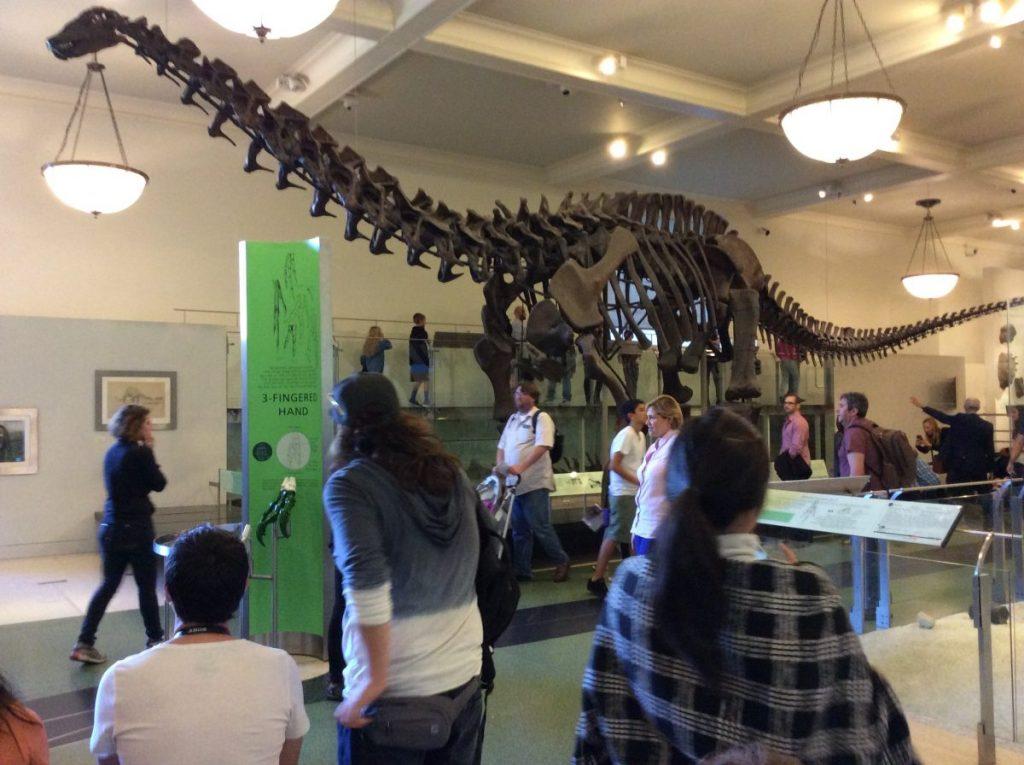 new york museo storia natura