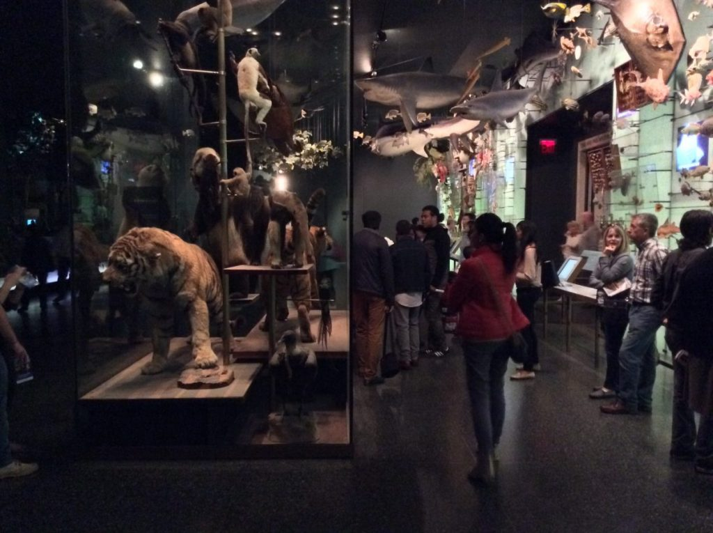 new york museo scienze naturali